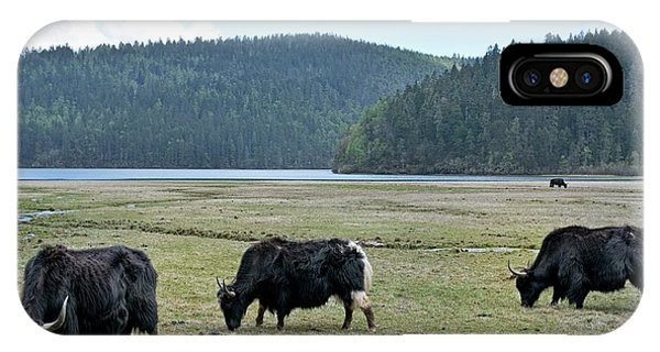 A Herd Of Yaks In Potatso National Park IPhone Case