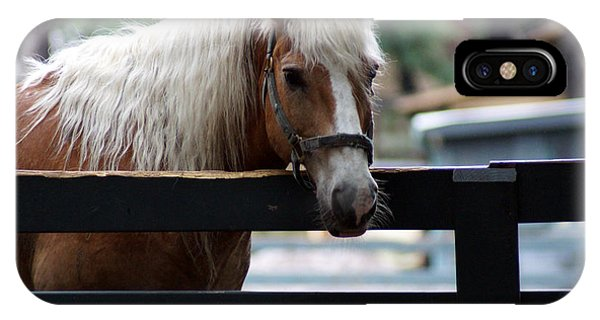A Hilton Head Island Horse IPhone Case