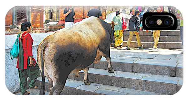 A Holy Cow Climbing Steps From Bagmati River In Kathmandu-nepal  IPhone Case