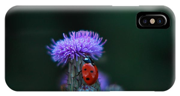 Little Things iPhone Case - A Lady Bug Climbing A Thistle by Jeff Swan