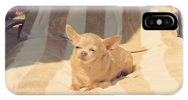 Chihuahua iPhone Case - A Life Of Leisure by Laurie Search