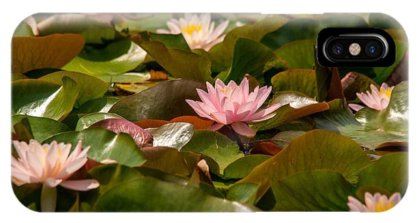 A Lily Carpet IPhone Case