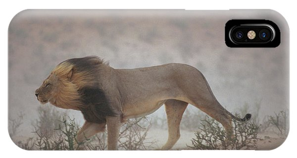 A Lion Pushes On Through A Gritty Wind Phone Case by Chris Johns
