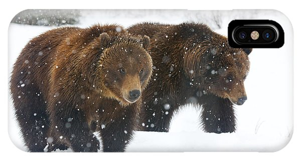 Winter iPhone Case - A Pair Of Adult Brown Bears Walk by Doug Lindstrand