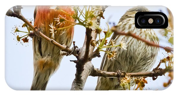 A Pair Of House Finches IPhone Case