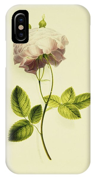 A Pink Rose IPhone Case