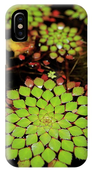 Far North Queensland iPhone Case - A Pot Plant Display In The Cairns by Paul Dymond