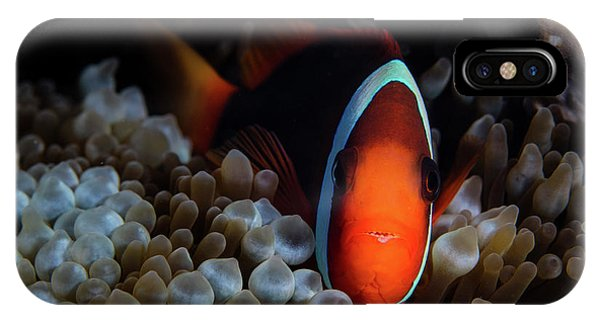 Amphiprion Melanopus iPhone Case - A Red And Black Anemonefish Sunggles by Ethan Daniels