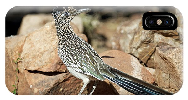 A Road Runner Pauses Momentarily Phone Case by Richard Wright