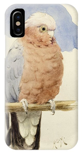 Cockatoo iPhone Case - A Rose Breasted Cockatoo by Henry Stacey Marks