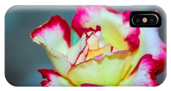 iPhone Case - A Rose by George Fredericks