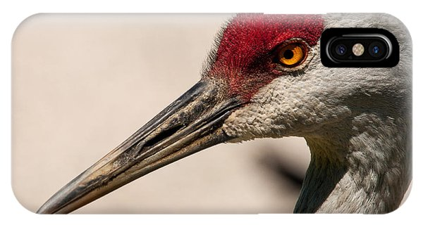 A Sandhill Crane Portrait IPhone Case