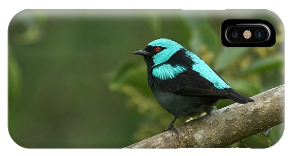 Scarlet iPhone Case - A Scarlet-thighed Dacnis, Cacnis by William Sutton