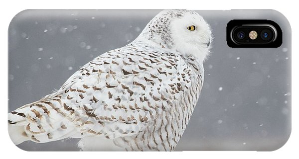 A Side Portrait Of Snowy Owl Phone Case by Ming H Yao