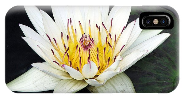 Botanical Beauty IPhone Case