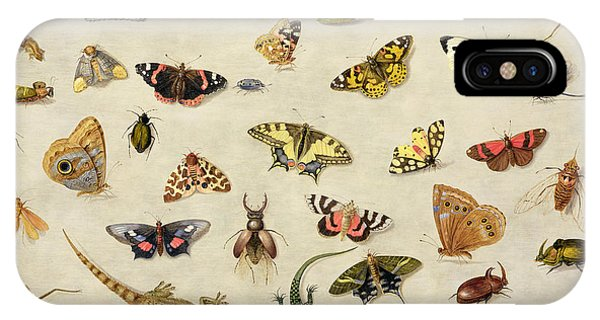 Cricket iPhone Case - A Study Of Insects by Jan Van Kessel