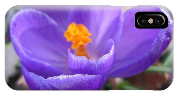 Springjoy IPhone Case
