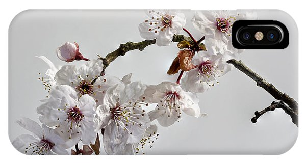 A Touch Of Spring IPhone Case