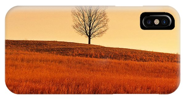 A Tree Is An Object Of Beauty Vii IPhone Case