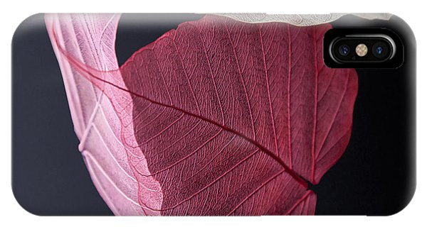 Leaf iPhone Case - A Trinity Of Leaves by Maggie Terlecki