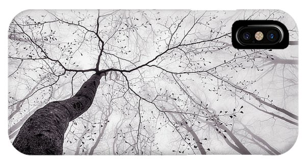 Mist iPhone Case - A View Of The Tree Crown by Tom Pavlasek