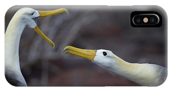 Albatross iPhone Case - A Wave Albatross Couple In A Courtship by Peter Essick