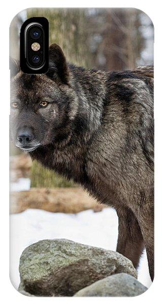 A Wolf's Intense Focus IPhone Case