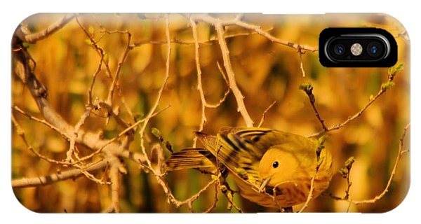 Little Things iPhone Case - A Yellow Bird Posing by Jeff Swan