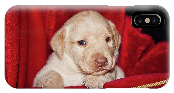 Yellow Lab iPhone Case - A Yellow Labrador Retriever Puppy Lying by Zandria Muench Beraldo