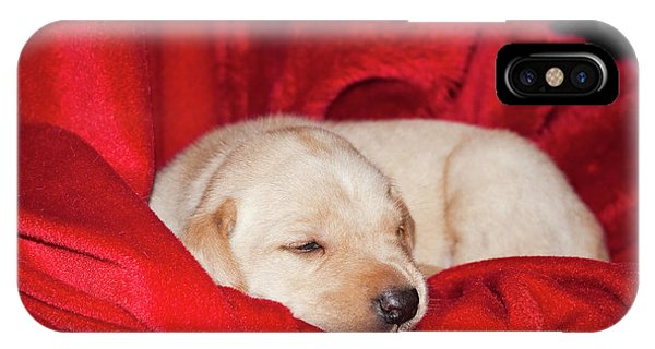 Yellow Lab iPhone Case - A Yellow Labrador Retriever Sleeping by Zandria Muench Beraldo
