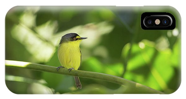 A Yellow-lored Tody Flycatcher IPhone Case