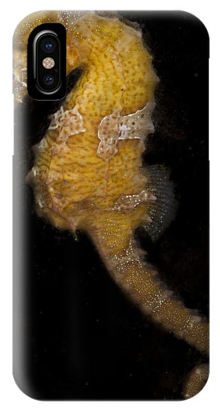 A Yellow Seahorse IPhone Case