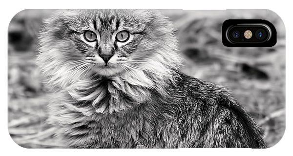 A Young Maine Coon IPhone Case