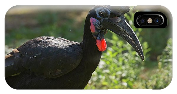 Abyssinian Ground Hornbill IPhone Case