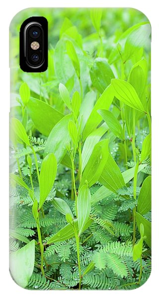 Acacia Seedlings Phone Case by Scubazoo/science Photo Library