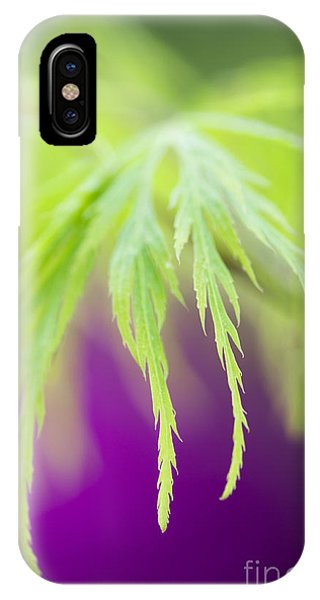 Acer Leaves Phone Case by Tim Gainey