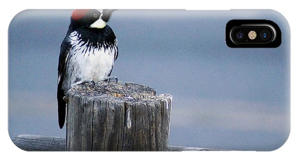 Acorn Woodpecker IPhone Case