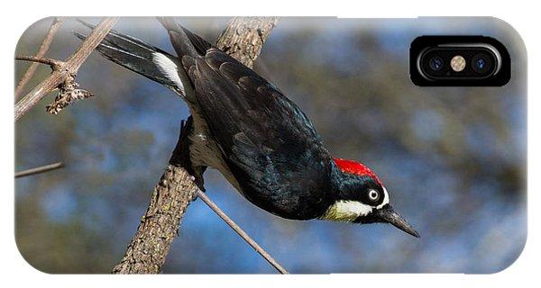 Acorn Woodpecker IPhone Case