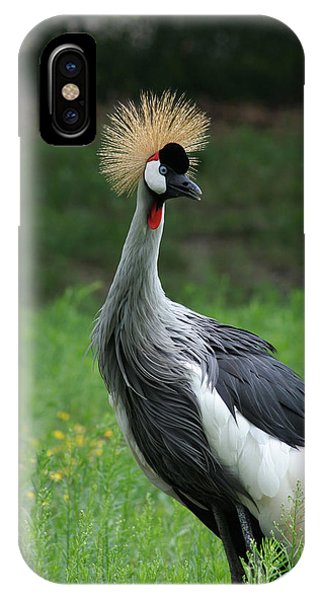 African Crowned Crane #3 IPhone Case