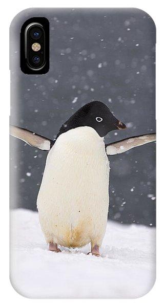 Winter iPhone Case - Adelie Penguin In Snowstorm by Steven Kazlowski