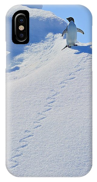 Adelie Penguin On Bergie Bit IPhone Case