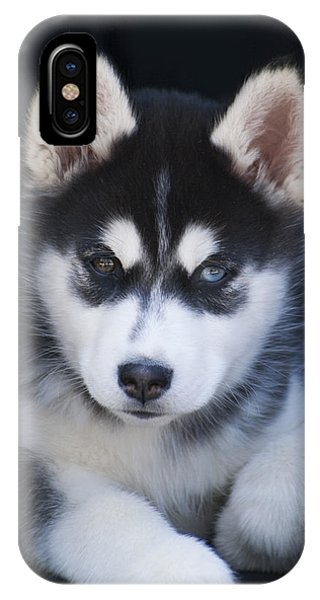 Adorable Siberian Husky Sled Dog Puppy IPhone Case