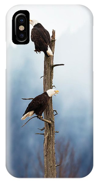 Adult Bald Eagles  Haliaeetus IPhone Case