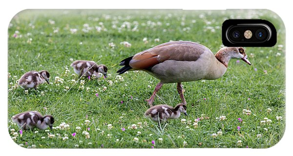 Goslings iPhone Case - Africa, South Africa, Cape Town by Jaynes Gallery