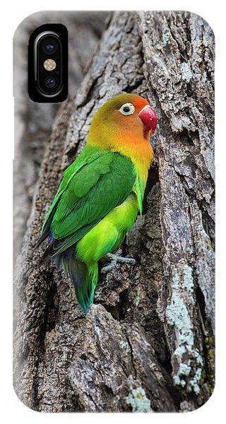Lovebird iPhone Case - Africa Tanzania Fischer's Lovebird by Ralph H. Bendjebar