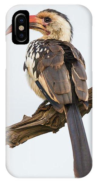 Africa Tanzania Red-billed Hornbill IPhone Case
