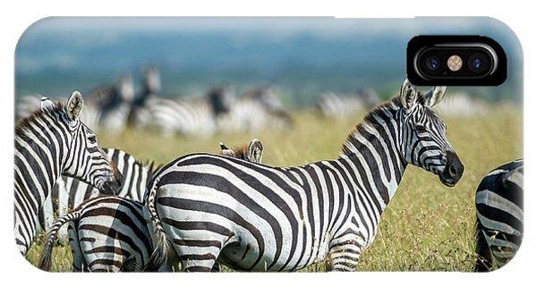 Zebra iPhone Case - Africa, Tanzania, Zebras by Lee Klopfer