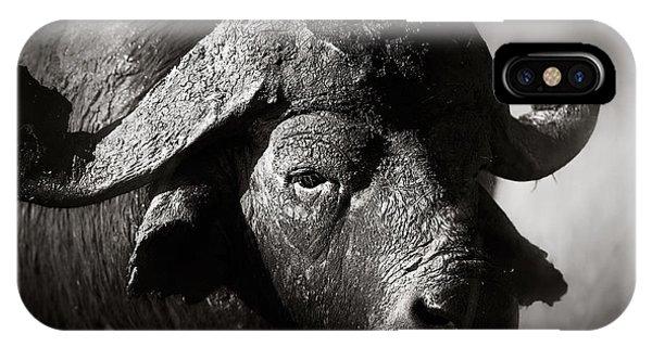 African Buffalo Bull Close-up IPhone Case