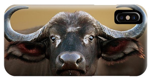 African Buffalo Cow Portrait IPhone Case