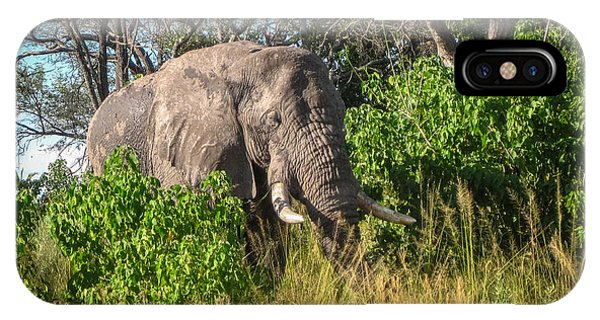 African Bush Elephant IPhone Case